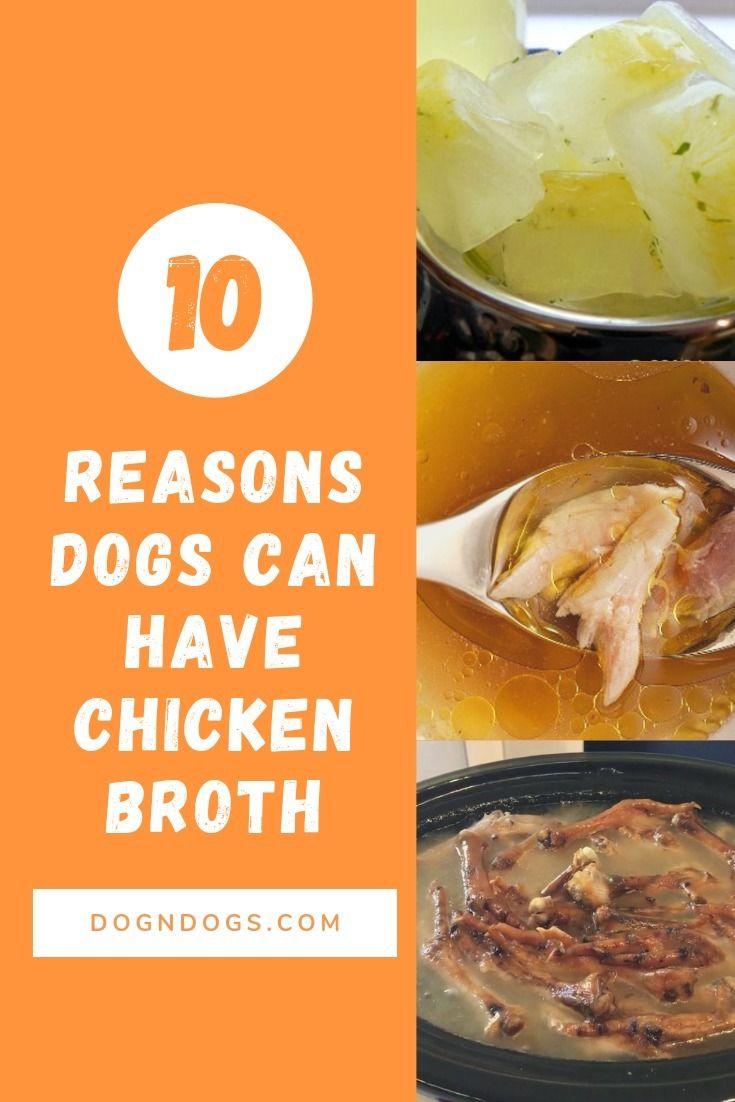 chicken broth dog worried dogs  - courteousman | ello