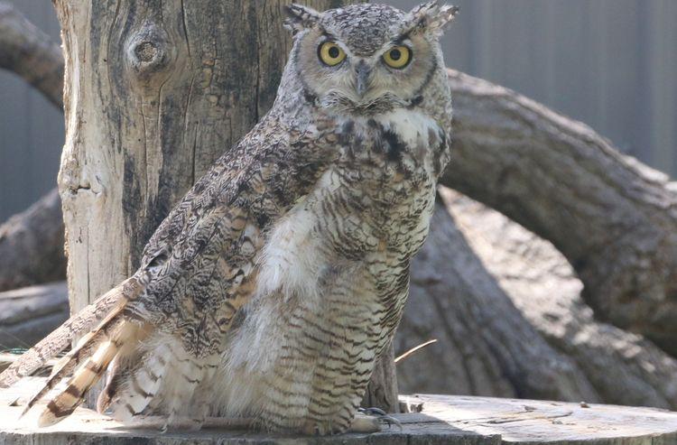 owl - onecactusdan   ello