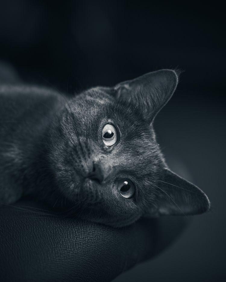 cat, kitten, kitty, cute, speedlight - jamesplate   ello