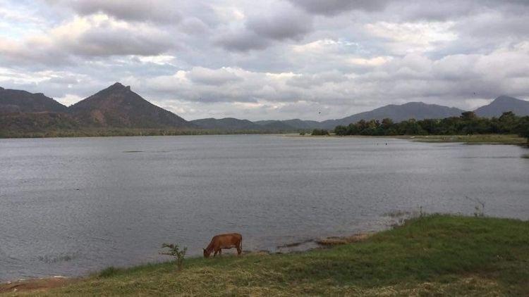 Kandalama Lake - cotyledontours | ello