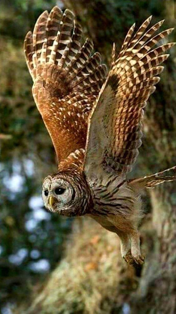 Nice bird - flora_mather | ello