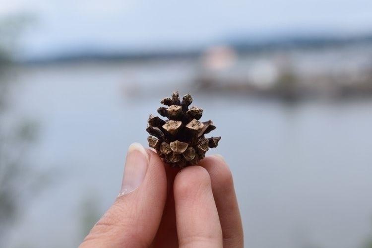 //pine - brighterthansunshine   ello