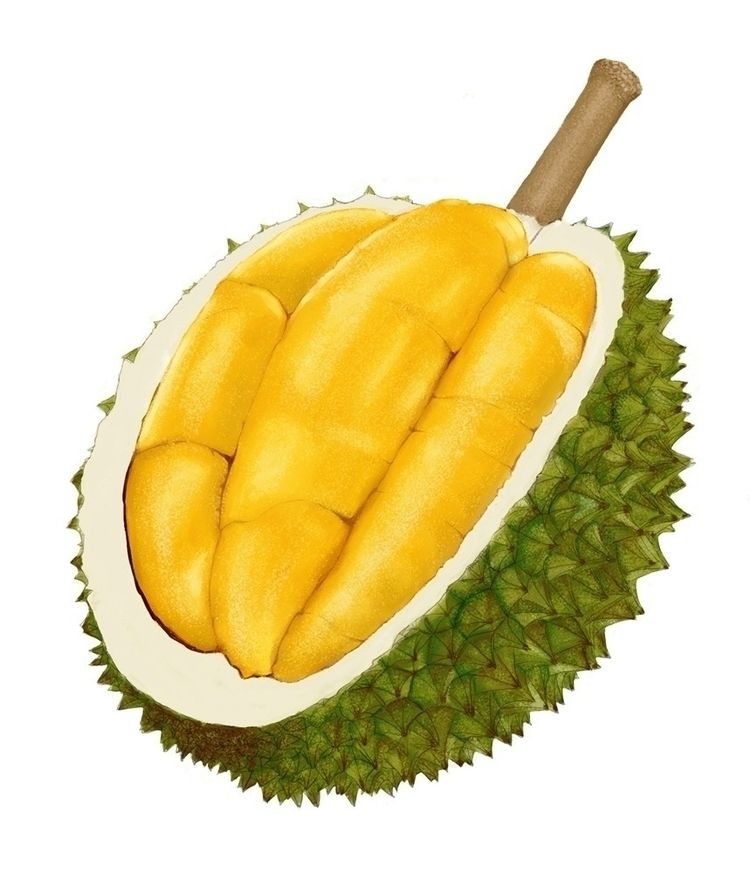 Musang King. King Durians.  - digitalart - paulchoo | ello