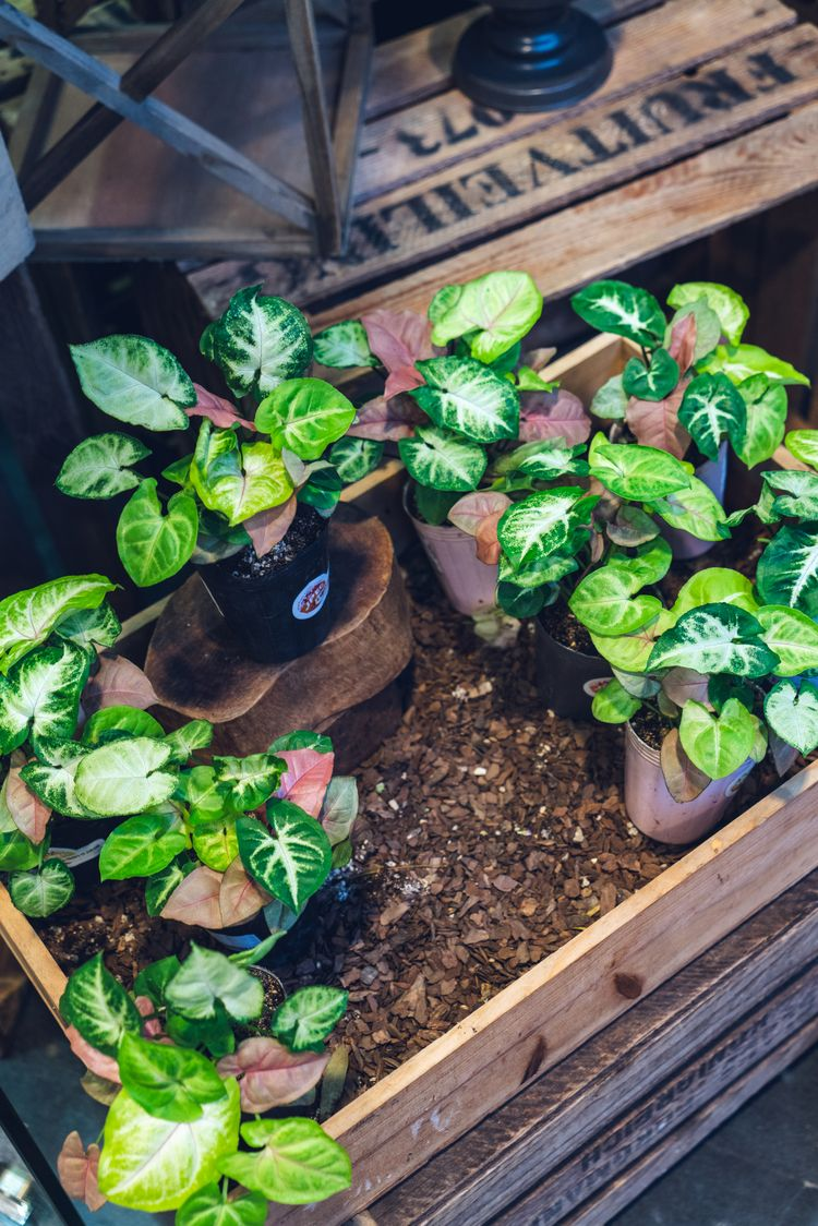 beautiful green plant wooden bo - jonathan_tsc | ello