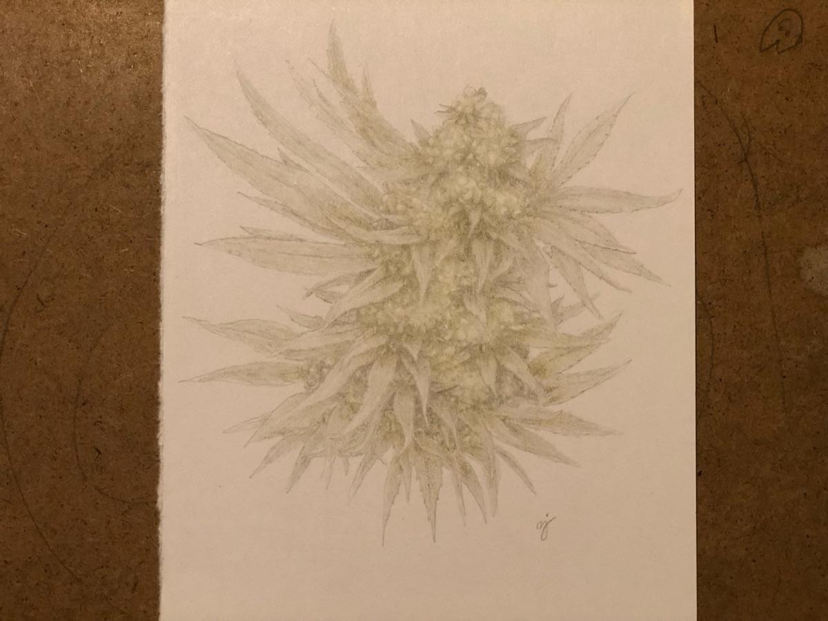 Healing flower - heal, art, drawing - mindsketchin | ello
