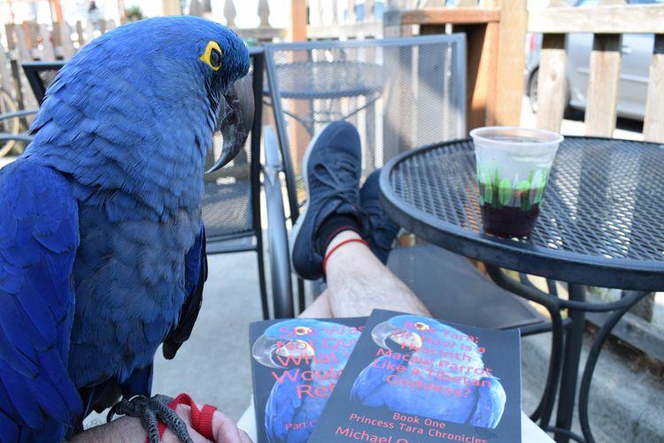 Hanging Hyacinth Macaw Princess - michaelostrogorsky   ello