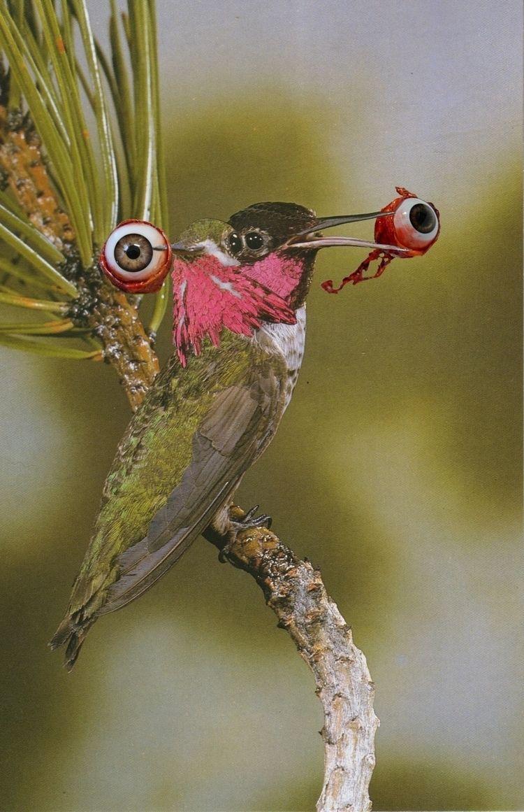 Updated bird, requested friend  - skanktalk | ello