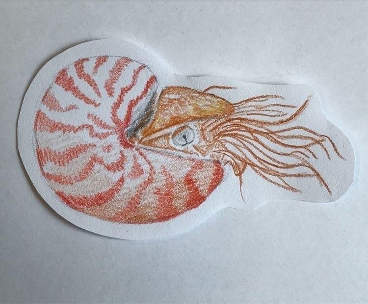 Nautilidae - biology, nautilidae - annahruskova   ello