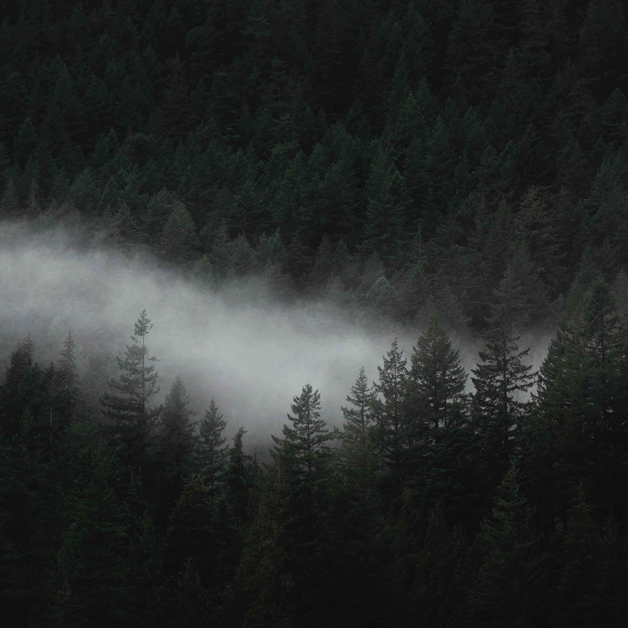 Taste Zen — Haiku meditation te - minimalismlife | ello