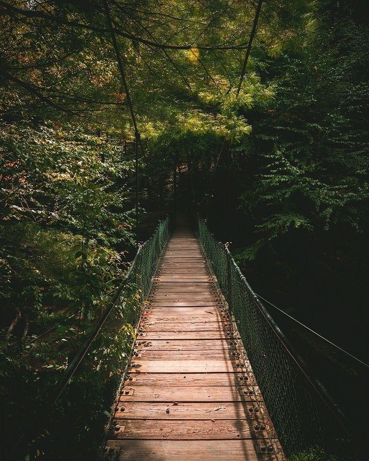 Forest Bridge - goldendog | ello