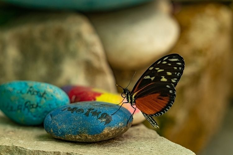 Hey Rock! butterfly (Heliconius - theexplorographer | ello