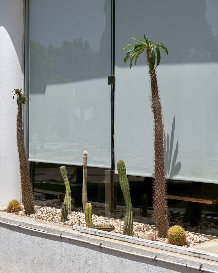 Cacti. #pho - alon   ello