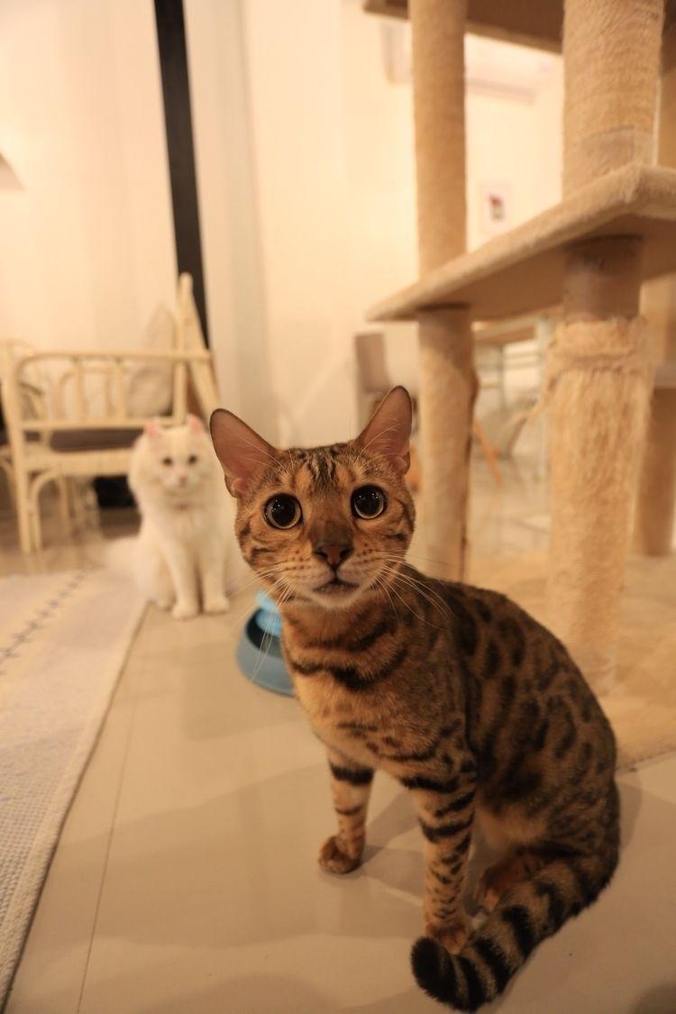 Meow Laos - orangedrummaboy   ello