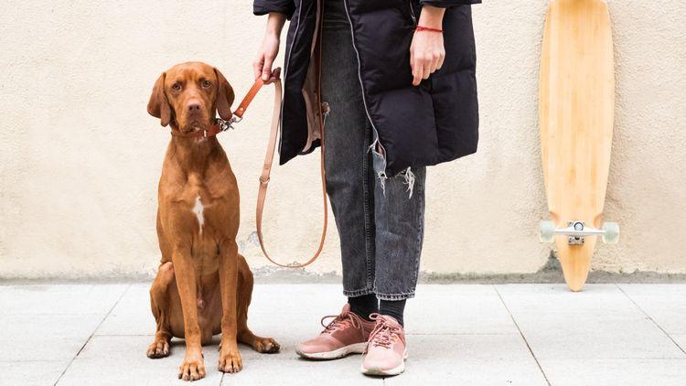 MAREVENTO - Leather dog leash c - luscoandfusco   ello