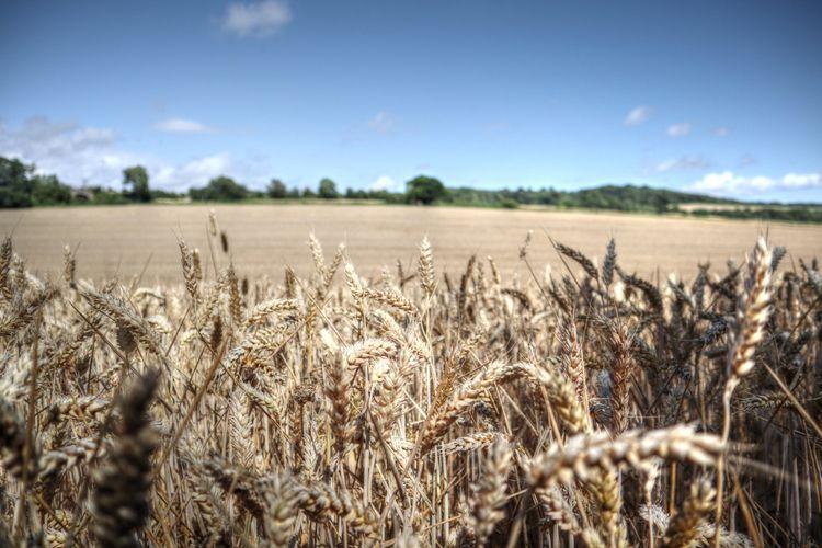 Time harvest - kent, england, canon - mattoutdoors | ello