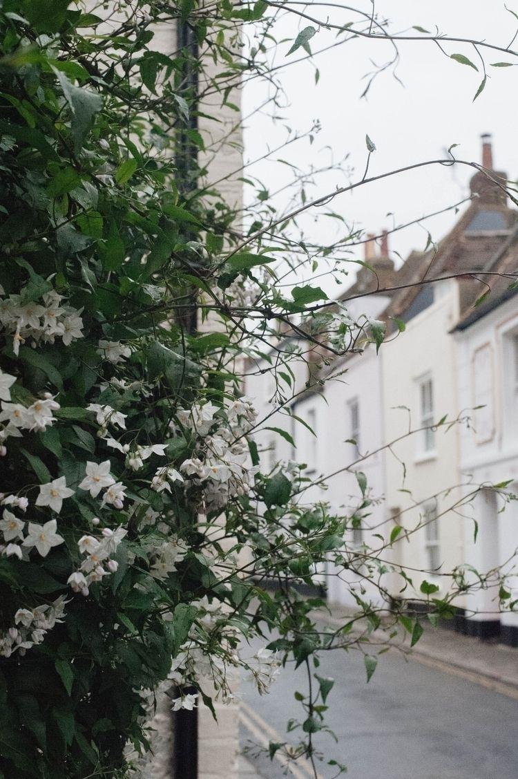 Autumn flowers - deal, kent, England - hannahjaneclements | ello