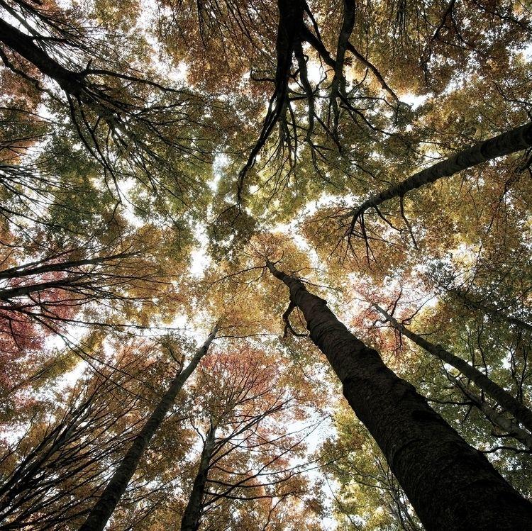 leave roof leaves feel sorrow - simone_manzocchi | ello