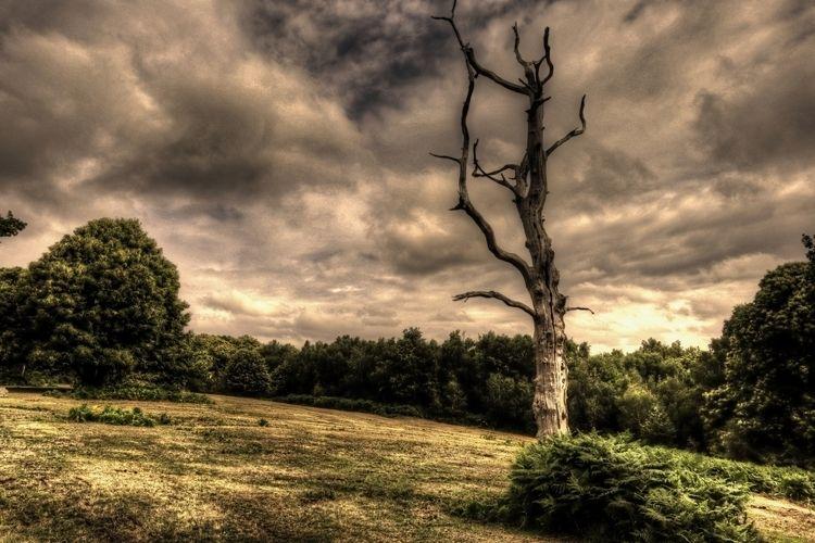 HDR - woods, trees, outdoors, england - mattoutdoors | ello