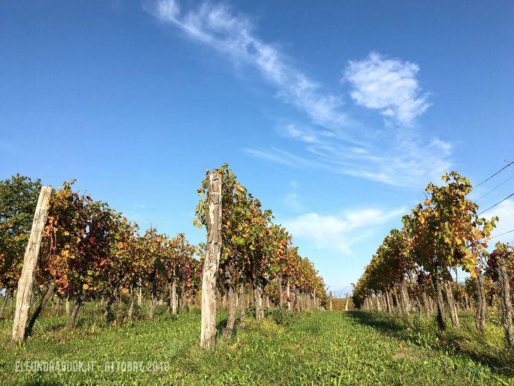 Vineyards. sky - vineyards, landscape - eleonorabook   ello