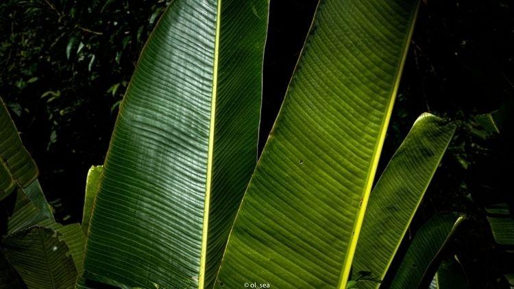 blackwhite, photography, contrast - ol_sea | ello