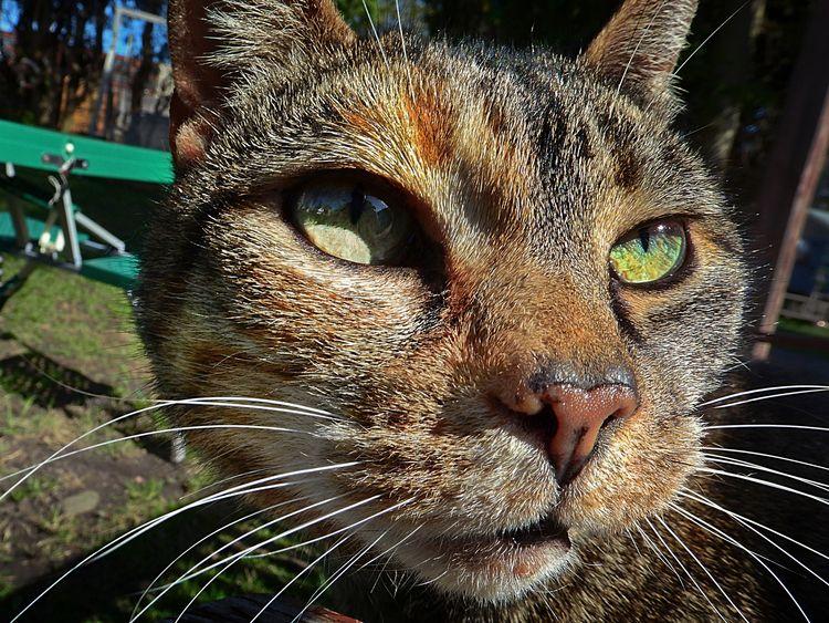 Prowl - Cat, Pet, Animal, DomesticCat - darkroomimaging | ello