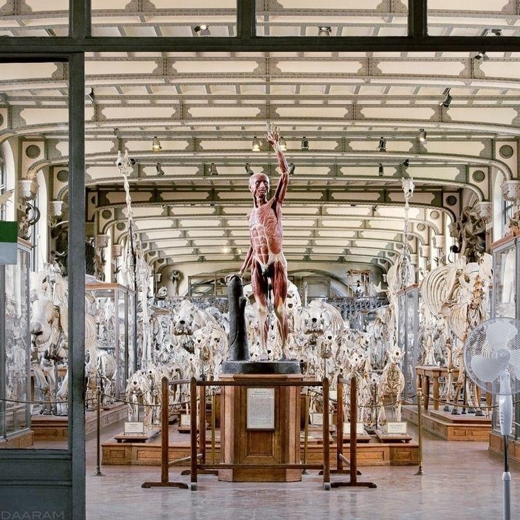 entrance: Entrance Paleontology - daaram | ello