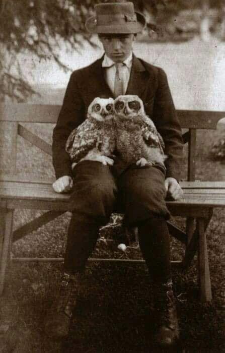 Man pet owls, 1911 - arthurboehm | ello