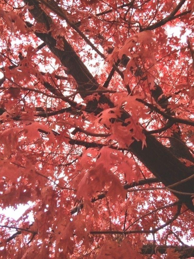 Autumn Sacramento - shiwak | ello