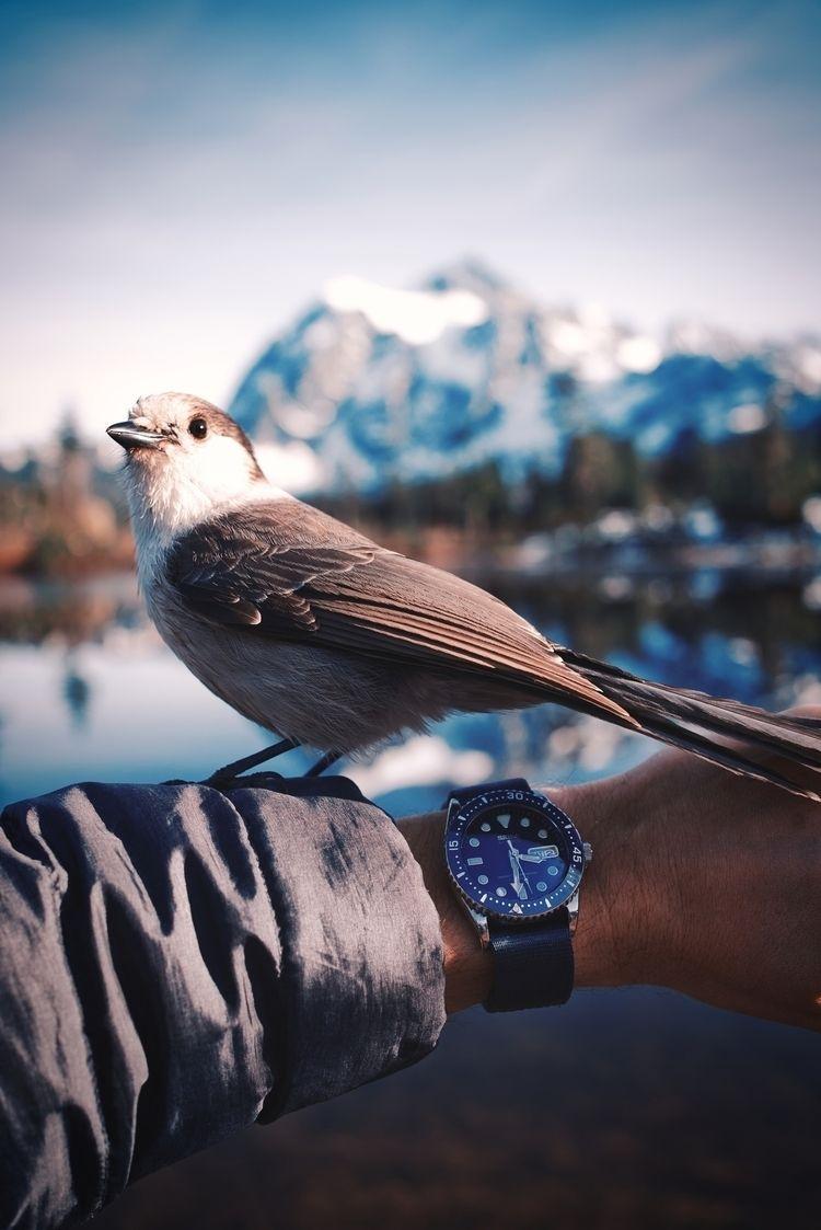 PNW bird - watchfam, zulualphastraps - ajbarse   ello