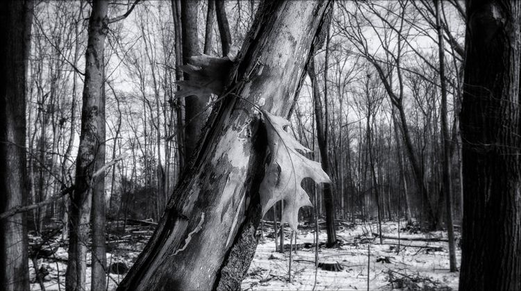 monochrome, blackandwhite, naturephotography - docdenny | ello