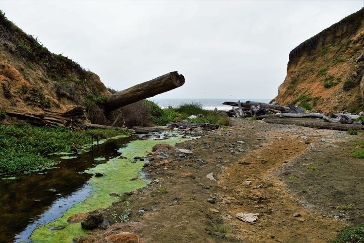 driftwood Mussel Rock, Daly Cit - bmwatrin | ello