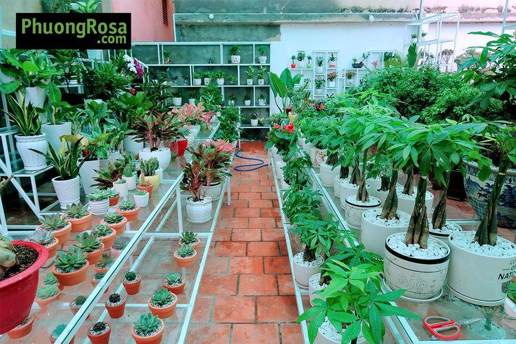 Phương Garden là công ty chuyên - phuonggarden   ello