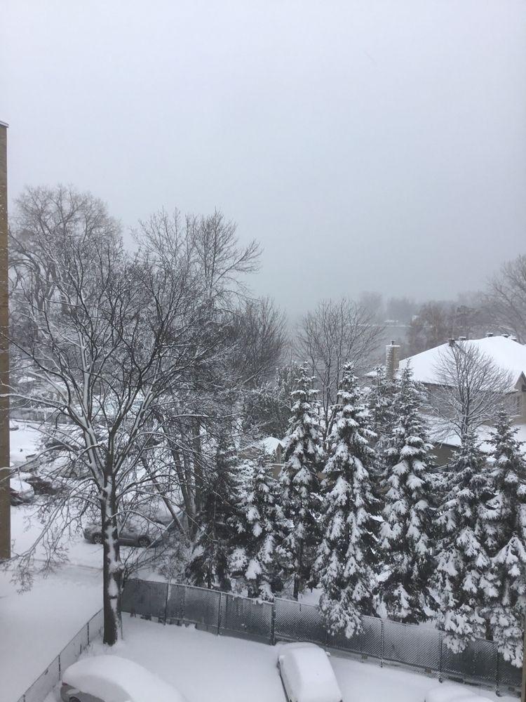December 31st 3019. snowy cold  - tjcs63 | ello