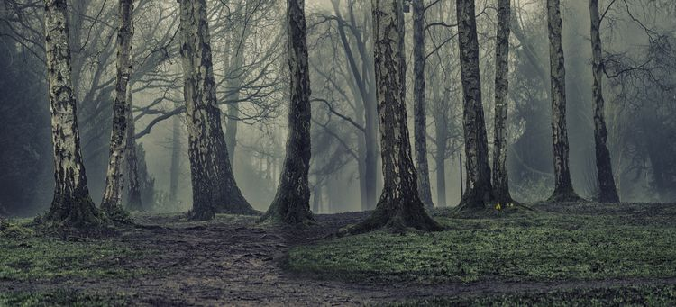 Apley Woods Telford UK - simonhark | ello