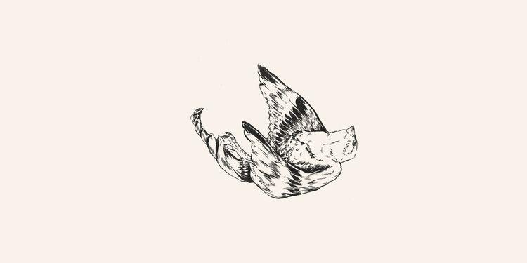 Sparrow // Chinese Medicine - illustration - danielido | ello