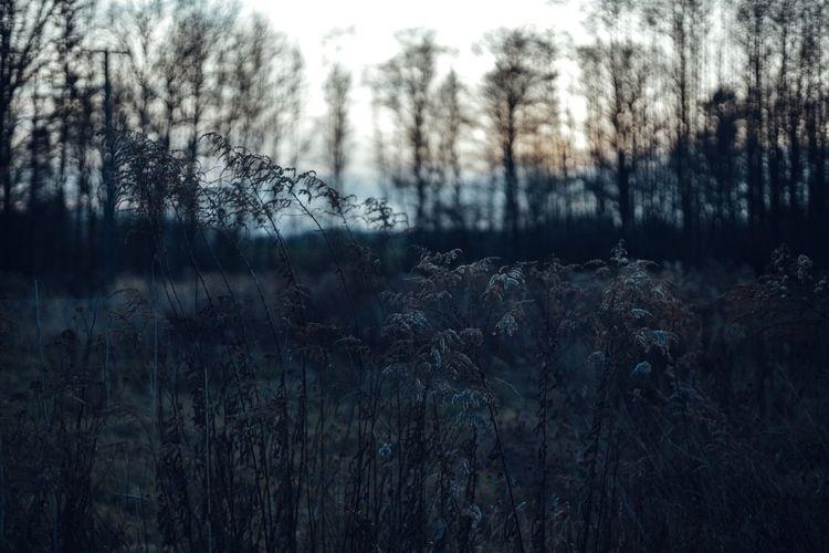 1.01.2020 - noyephoto | ello