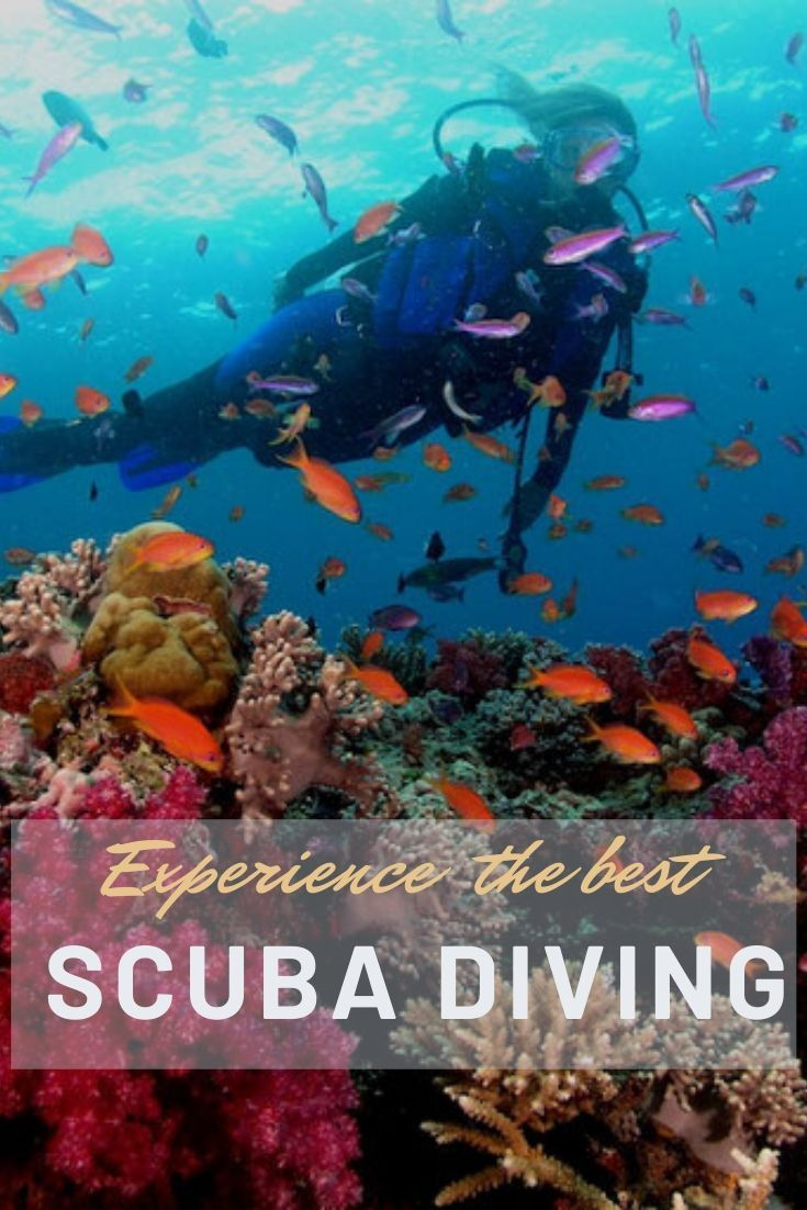 wondering diving Fiji Popular?  - paradiseinfiji | ello