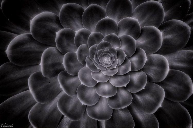Fibonacci sequence - robzucho,, photography, - abstractcolorism   ello