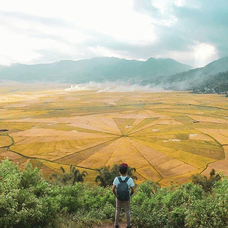Acres spiderwebs rice fields, t - belvaadeline | ello