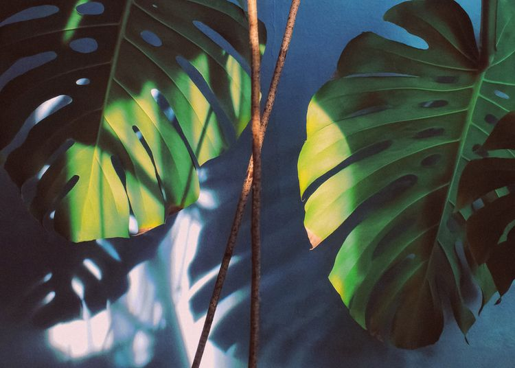 Play light II | Instagram - monstera - andreigrigorev | ello