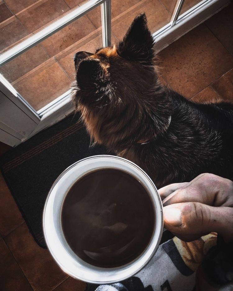 share pic dog enjoying cup coff - spuertacus_ | ello