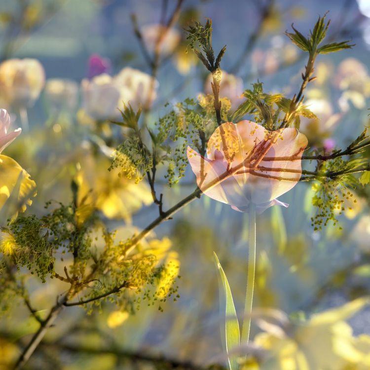 avg20190424 springtime 4 result - whltexbread | ello