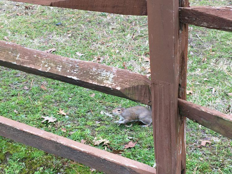 Squirrel running meet 1 1-31-20 - awedbydesign72 | ello