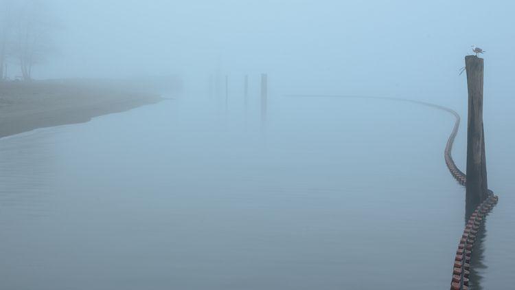 Good Morning, Barnet Fog (1 2)  - rhinocerous | ello