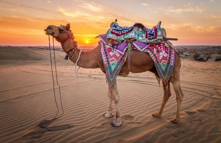 Ships Desert- sun sets Thar Des - davecurry8 | ello