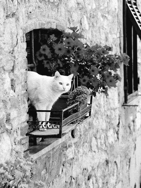 """Life boring, flowers, sunshine - lolosbri | ello"