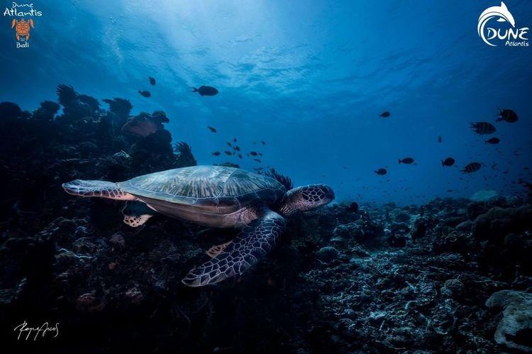 scuba diving experience Bali li - belvaadeline | ello