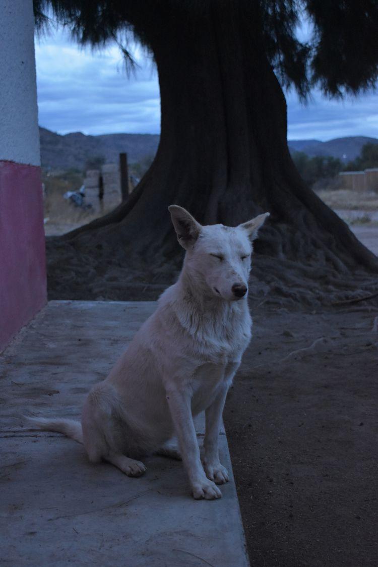 Waiting patiently - dog, photography - kashhj | ello