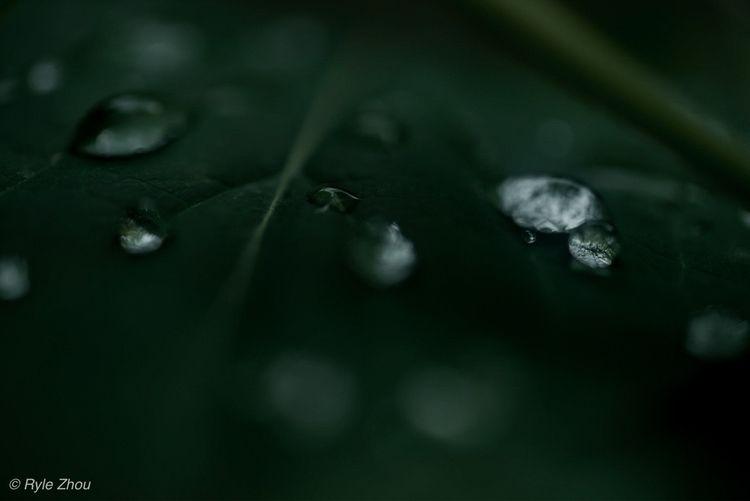 rain - rylezhou | ello