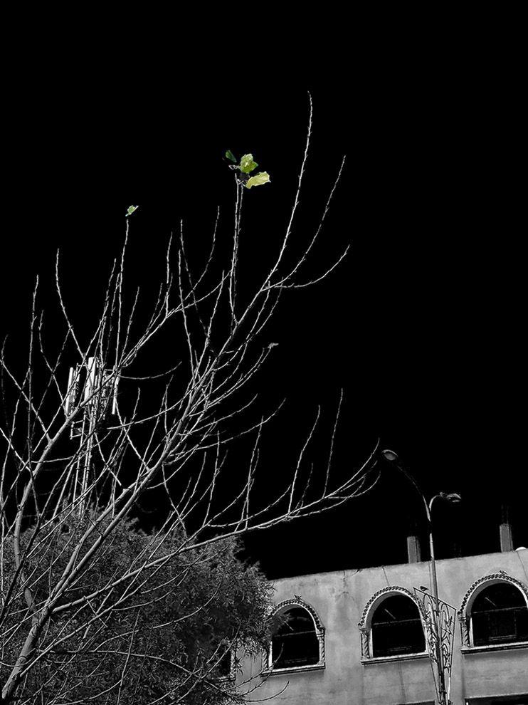 Les dernières feuilles de - algeriecapitalealger - abderrahmanedjelfaoui   ello